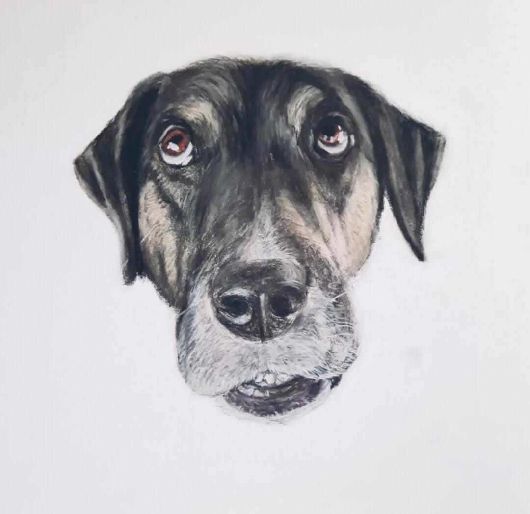 Hond met Pastel