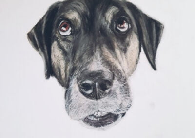 Dog Head with Pastels