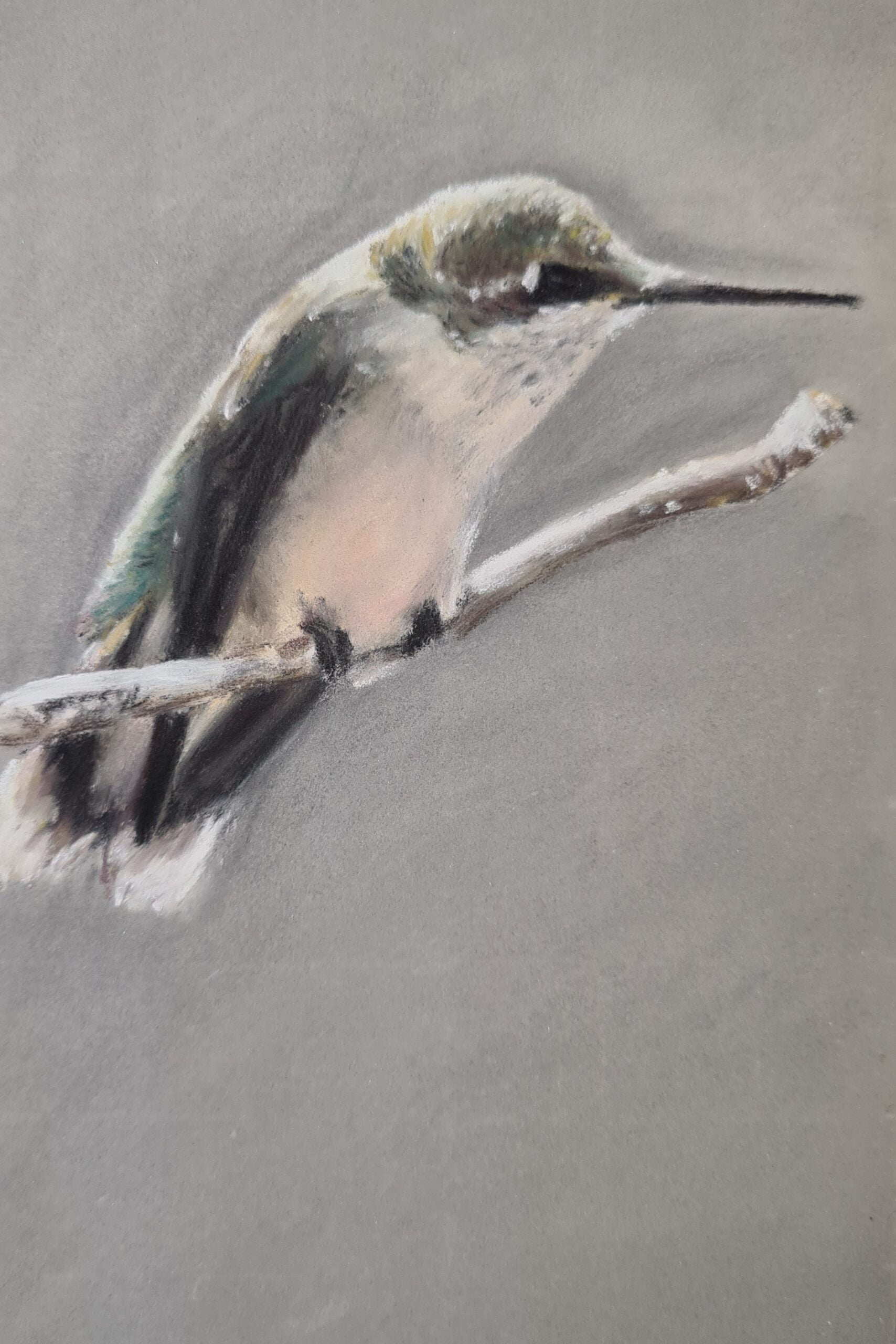 Hummingbird - Study