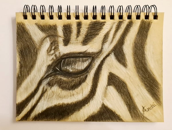 Zebra Charcoal Sketch